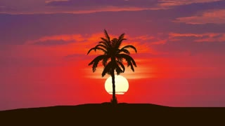 3 in 1 video! The palm against the background of bright sunset. Time lapse. Wide angle