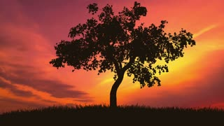 4 in 1 video! The tree against the background of bright sunset. Real time capture. Wide angle