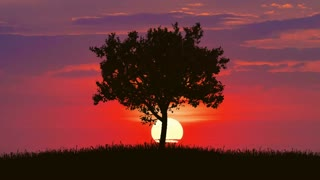 4 in 1 video! The tree against the background of bright sunset. Time lapse. Wide angle