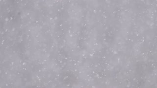5 in 1 video! The heavy snow on the background of forest. Real time capture