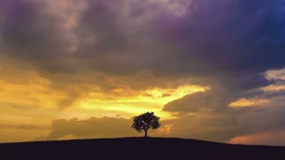 5 in 1 video! The tree stand against the background of sunset. Time lapse. Wide angle