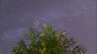 The forest view from the bottom by sky with stars. Time lapse capture