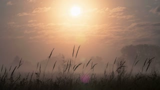 The sunrise (sunset) with clouds above spikelets and forest. Windy and foggy weather. Shot with Red Cinema Camera