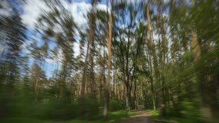 The walk along the beautiful tree in the forest. Time lapse (Hyperlapse). Wide angle