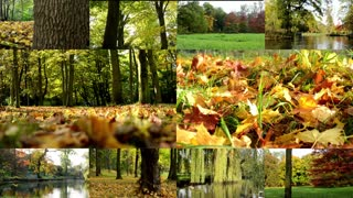 4K MONTAGE (compilation) - Autumn park (forest-trees) - fallen leaves - sun rays (sunny) - forest (trees) - lake with people