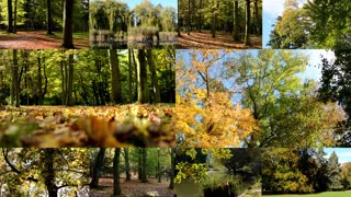 4K MONTAGE (compilation) - Autumn park (forest-trees) - fallen leaves - sun rays (sunny) - forest (trees) - lake