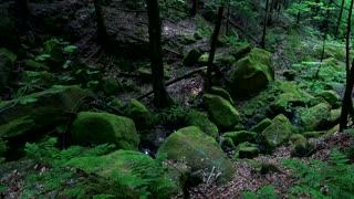A gloomy, rocky forest area