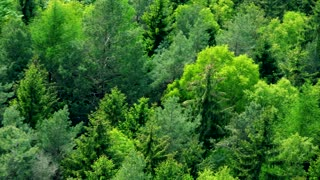 A thick forest area - aerial