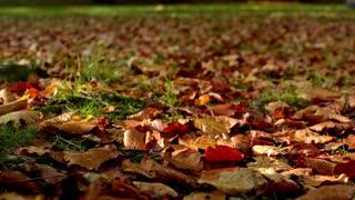 Autumn park - brown fallen leaves - sun rays - closeup