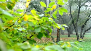 Autumn park (forest - trees) - fallen leaves - tree branch with spider web -mist
