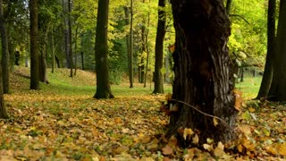 Autumn park (forest - trees) - fallen leaves
