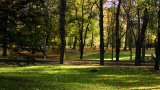 Autumn park (trees) - people walking (relax) - path - fallen leaves - sun rays