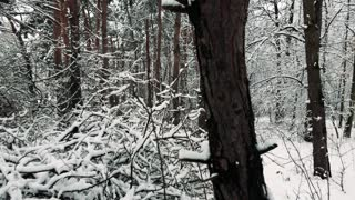 Blanket of bright snow on trees in forest