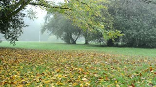 fallen leaves from trees (park - forest) - morning mist - wind