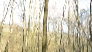 medieval battle - war - soldiers wait in forest