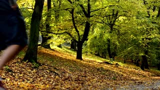 People walking - path - Autumn park (forest - trees) - Fallen leaves - sunny