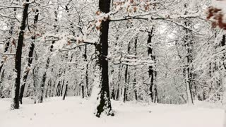 Trees with blanket of bright snow in forest