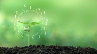 Dollar money tree in hologram money from a tree, success financial business idea.