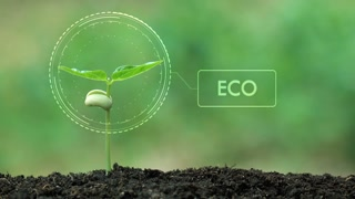 Planting a tree and ECO hologram for save the earth and natural , clean ecology in natural.