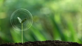 Planting a tree and Environment hologram for save the earth and natural , clean ecology in natural.