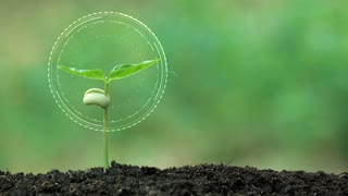 Planting a tree and Fresh hologram for save the earth and natural , clean ecology in natural.