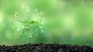 Planting a tree and Oxygen hologram for save the earth and natural , clean ecology in natural.