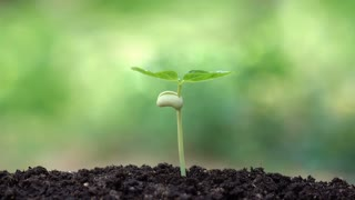 Planting a tree for save the earth and natural , clean ecology in natural.
