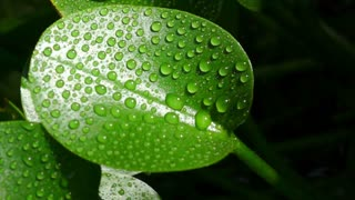 slow motion water drops on green leaf