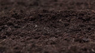 Sowinng the seeds , Planting a tree and ECO hologram for save the earth and natural , clean ecology in natural.