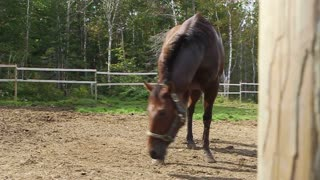 Horse rolls in dirt to dry off after a wash