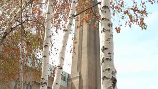 LONDON, UK - AUGUST 8, 2013: The Tate Modern tower framed by silver birch trees