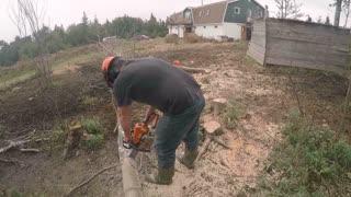 Man chopping tree with chsinsaw