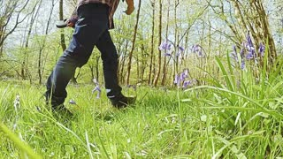 Man walks his Cocker Spaniel dog through a sunny bluebell filled wood in the UK