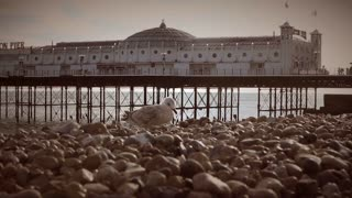 Seagulls on beach against backdrop of Brighton Pier, UK