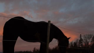 Silhouetted horse against a sunset cloud backdrop in the Canadian countryside in Cape Breton