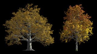 Autumn Trees with alpha mask