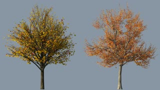 autumn trees with wind and alpha mask