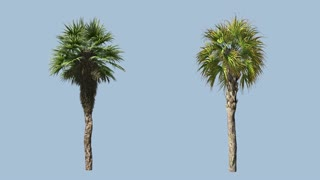 Palms wind with alpha mask