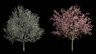 Spring blossom trees with wind and alpha mask
