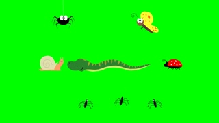 Cute insects. Spider, butterfly, snail, snake, ladybug and pond skaters on a green screen