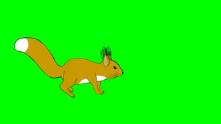 Funny squirrel running, walking and meeting friend on a green screen. Chroma key