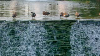 Birds and water. Small waterfall in motion. Nature reserve in summer.