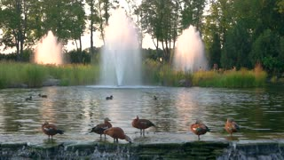 Birds near fountain. Trees and water. Visit a nature reserve.