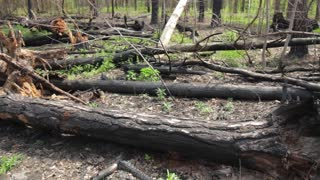 Bunch of burnt tree trunks. Damaged forest at daytime. Nature is in danger.