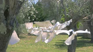 Clothes hanging in the wind. Trees and green grass. Washing powder TV commercial.
