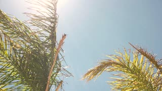 Green plant in the wind. Leaves of palm tree. Hot summer day in tropics.