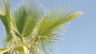 Green plant on sky background. Palm tree leaves and wind. Summer all year round.