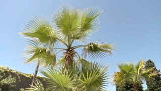 Palm tree and sky background. Green plant outdoors. Spend summer in tropics.