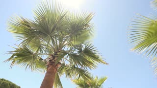Palm tree on sky backdrop. Green plant and sunlight. Spend vacation in tropics.