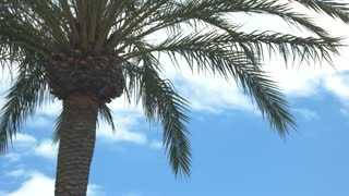Palm tree on sky background. Long green branches. Warm climate and clean air.